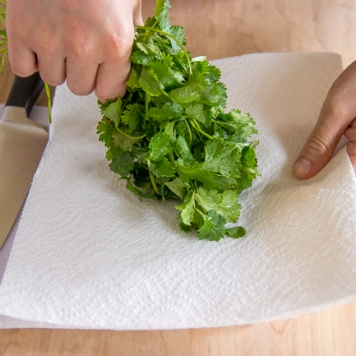 cilantro chopping